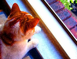 Ginger and white cat sitting in window