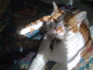 Brewskie-Butt-ginger-white-cat