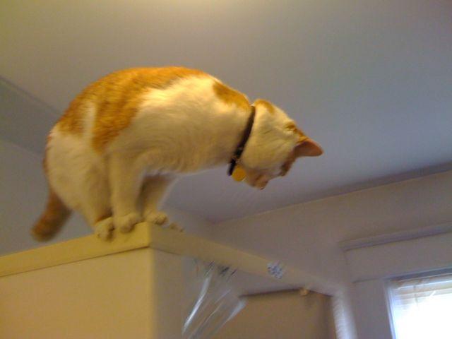 Brewskie Butt Ginger White Cat