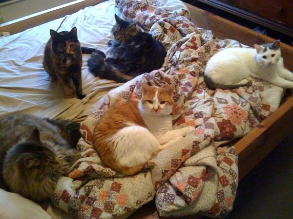 Five Cat Cuddle Pile