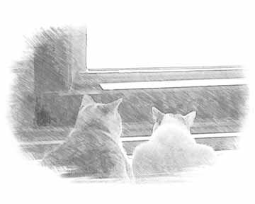 2 cats in window drawing