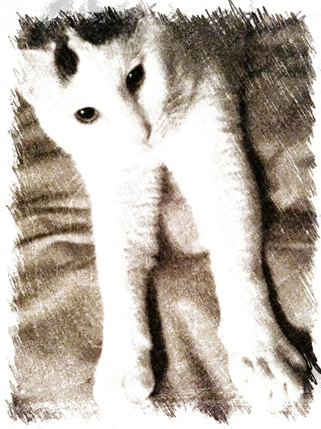 Okey-White-gray-cat-digital-art-BZTAT