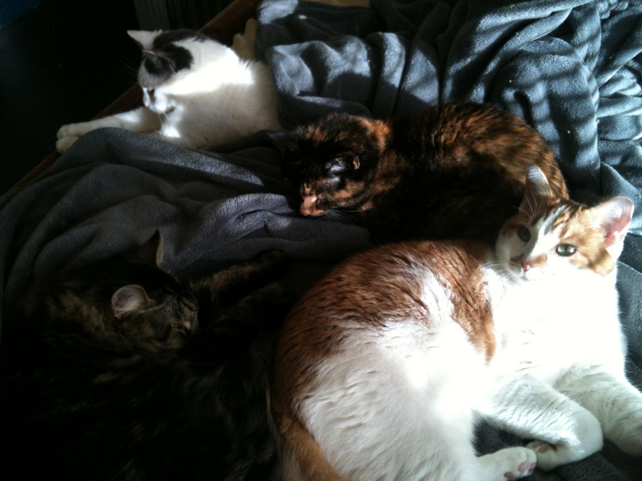 cat cuddle pile